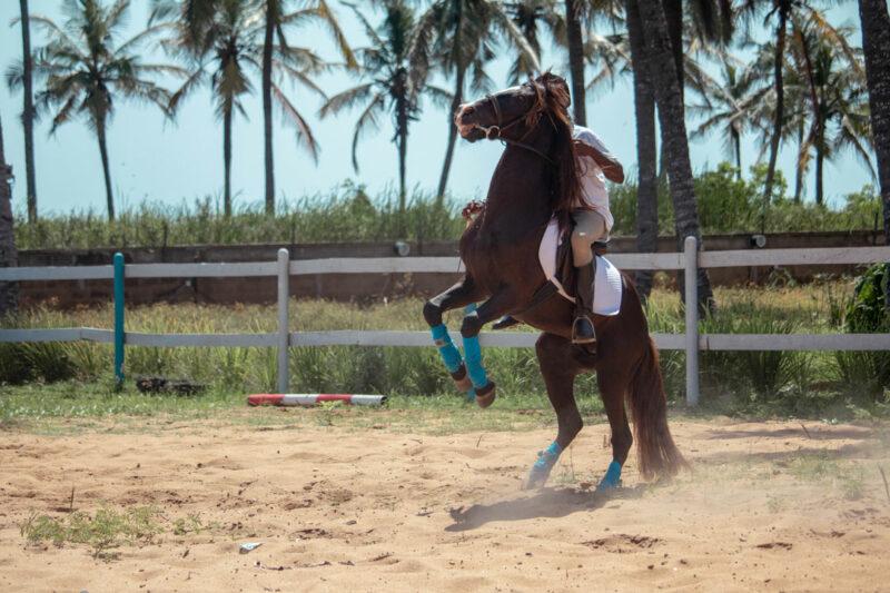 equitation-sarakawa