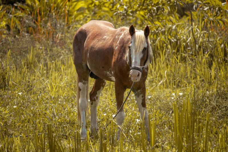 Equitation Sarakawa
